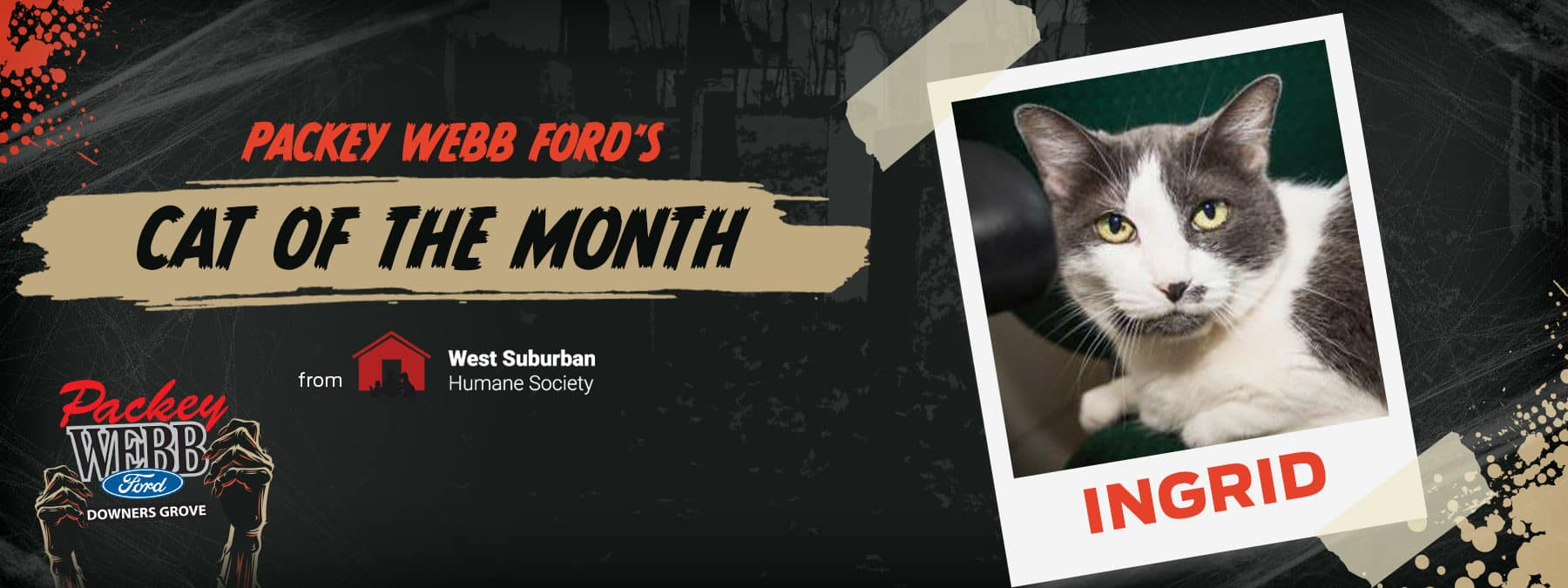 October Cat of the Month   Packey Webb Ford   Downers Grove, IL